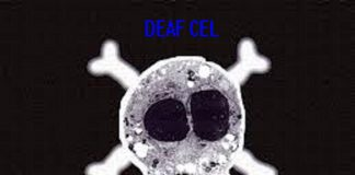 Deaf Cel - So Wrong, So Right