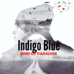 Introducing Indigo Blue