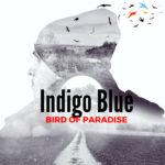 Indigo Blue - Bird of Paradise
