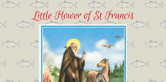 Joshua Francis - Little Flower of St Francis