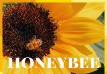 Gabe Griffin - Honeybee